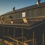 Jester King Brewery is Now Solar Powered