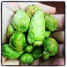 Terrapin Beer Co. - Fresh Citra Hops Flown In Straight from the Farm