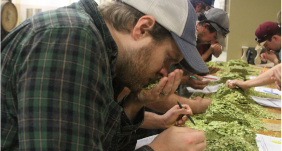 Smelling Hops Oskar Blues