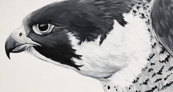 Ferrous Falcon