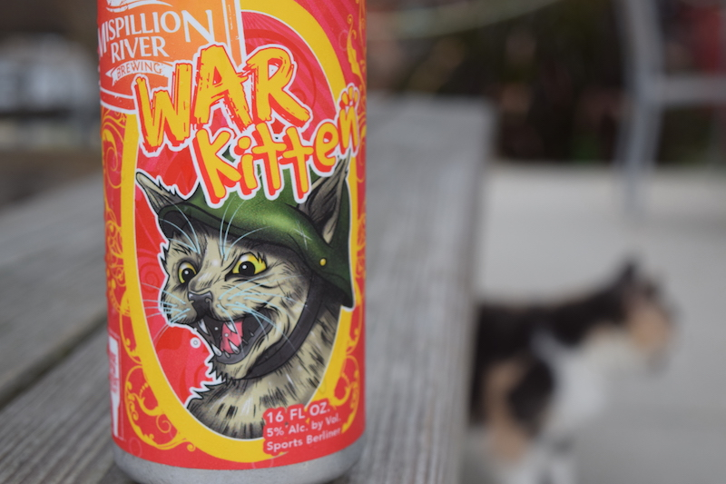 Mispillion War Kitten